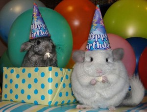 happy_birthday_animals_10